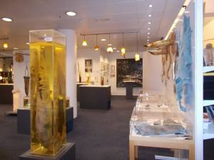 willy museum Iceland 2